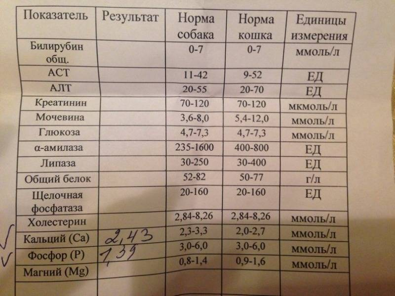 Аспартатаминотрансфераза (аст, асат, asat, ast) в крови, биохимический анализ