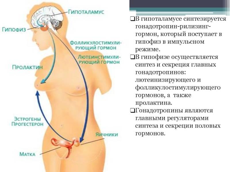 Гиперпролактинемия: симптомы и лечение, симптомы, диагностика и лечение   альфа - центр здоровья ^^in_city^^