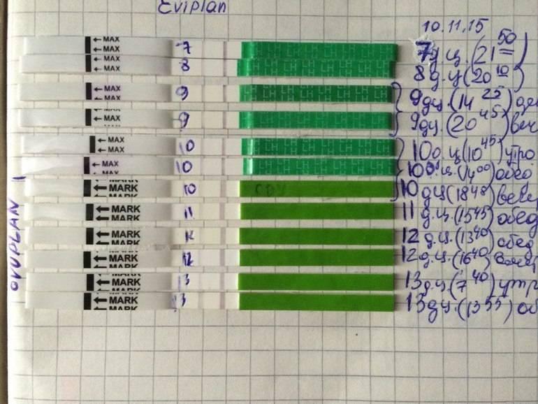 Тест на овуляцию - медицинский портал eurolab