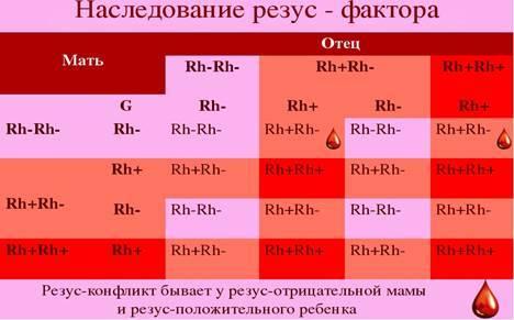 Наследование ребенком группы крови и резус-фактора от родителей, таблица вероятных сочетаний и пол младенца