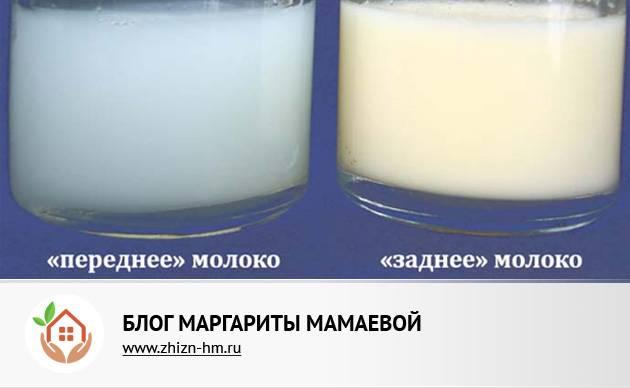 Переднее и заднее грудное молоко: как правильно кормить, что означает и как различить