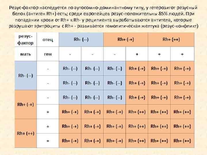 Наследование резус-фактора осуществляется по обычному аутосомно -доминантному типу. организм с резус положительным фактором (rh+) несет доминантны