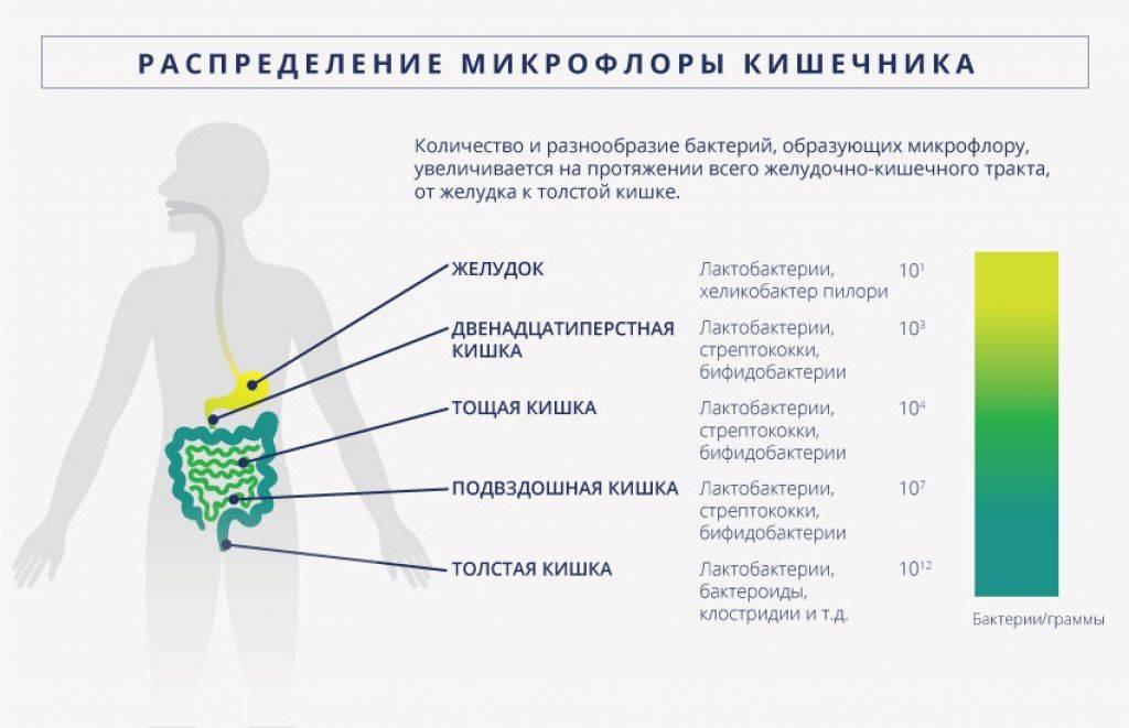 Отравление антибиотиками - признаки и лечение