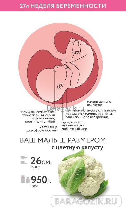 Календарь беременности. 25-я акушерская неделя