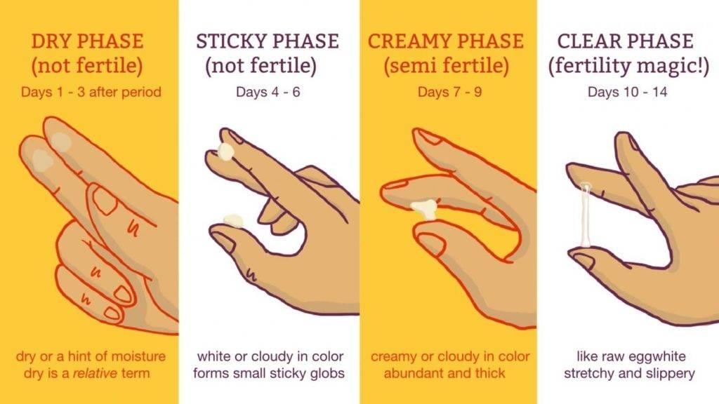 Какие бывают выделения после овуляции, если зачатие произошло?