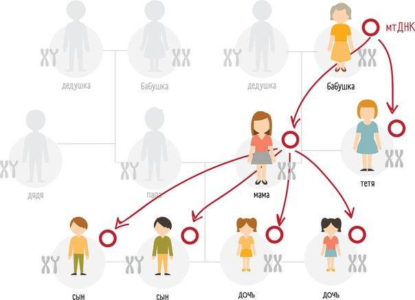 Классификация бабушек или «бабушковедение»