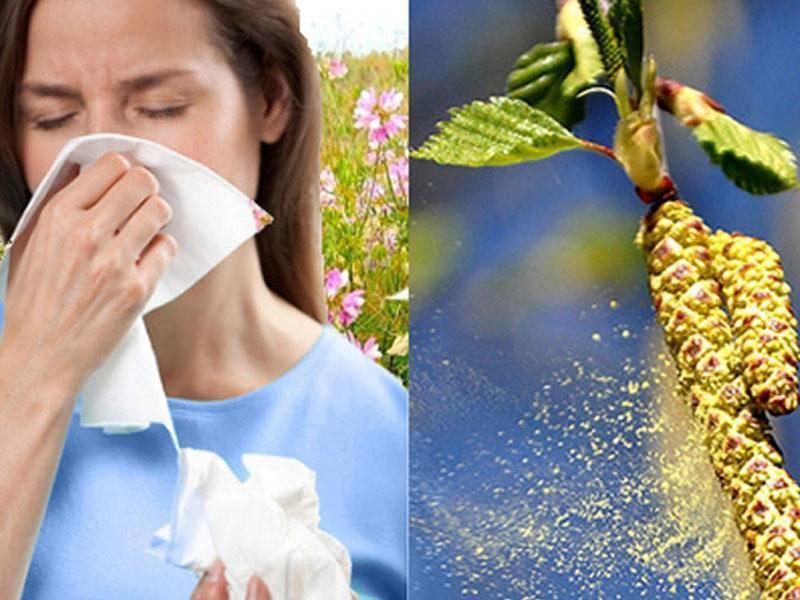 Лечение аллергии на березу