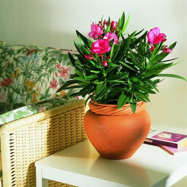 25 растений для детской комнаты