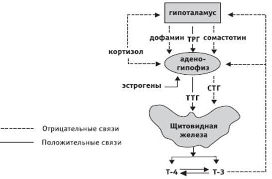 Повышенный пролактин у женщин: что это такое, норма у женщин в крови | центр репродукции «линия жизни»