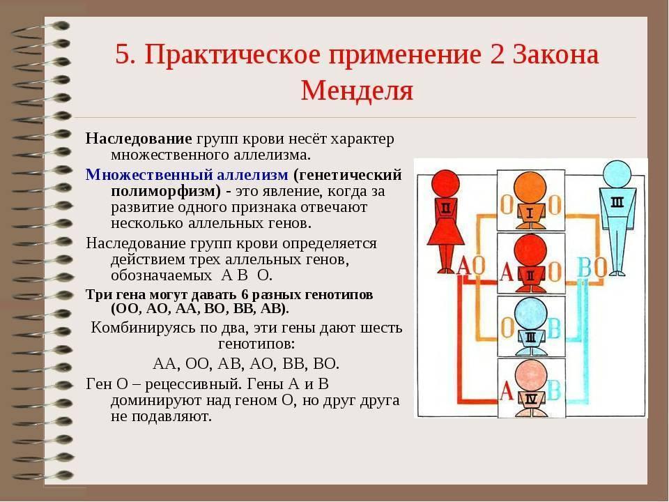 Наследование резус-фактора осуществляется по обычному аутосомно -доминантному типу. организм с резус положительным фактором (rh+) несет доминантны, биология