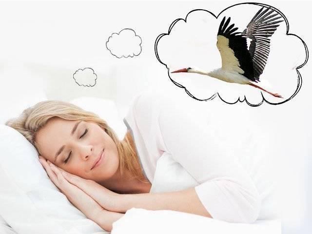 Какие сны предвещают беременность, в тч мальчиком или девочкой, скорую какие сны предвещают беременность, в тч мальчиком или девочкой, скорую