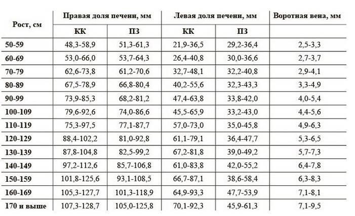 Размеры печени в норме у взрослых на узи: расшифровка, показатели нормальной величины
