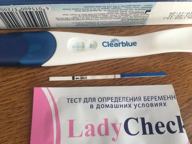 Вторая неделя беременности: признаки, узи, тест