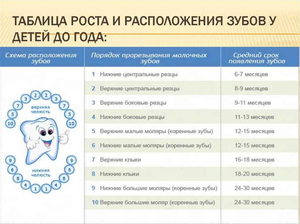 Время прорезывания зубов: общая информация, сроки и порядок прорезывания.