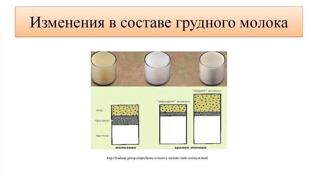Переднее и заднее молоко: грудное вскармливание в подробностях
