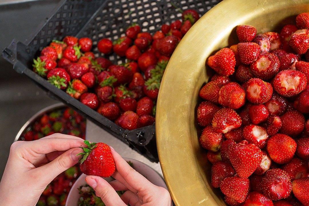 Почему не плодоносит клубника: 6 распространенных причин отсутствия ягод