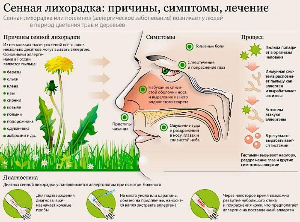 Аллергия на пыльцу - симптомы, причины, профилактика и лечение