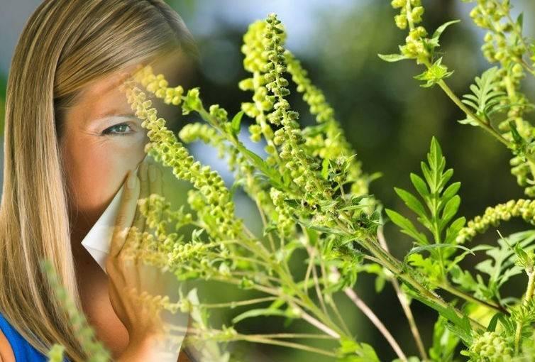 Поллиноз: все об аллергии на цветение :: здоровье :: рбк стиль