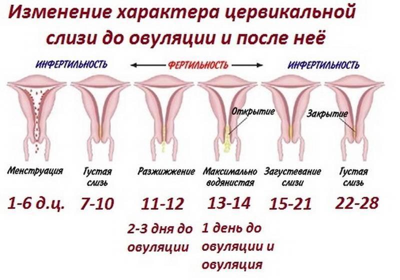 Месячные после лишения девственности (задержка, обильные, когда пойдут и будут ли)