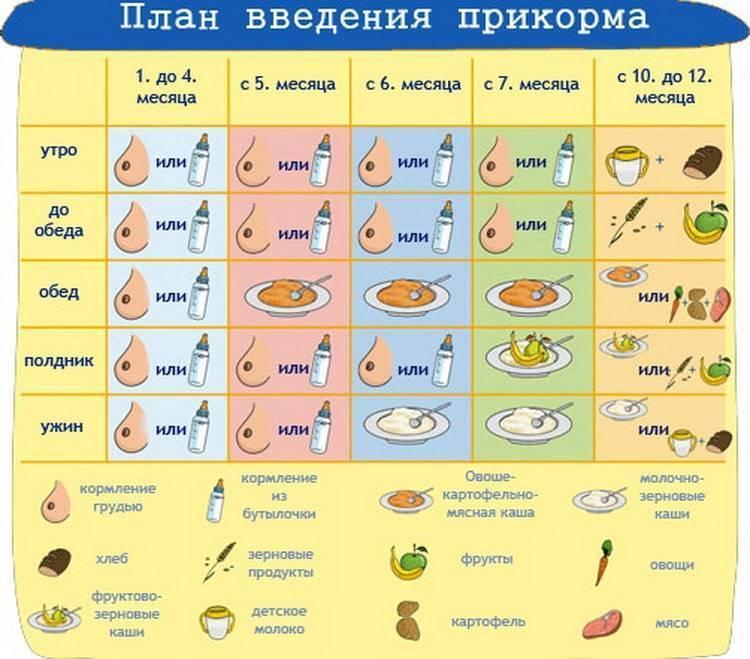 Прикорм по месяцам