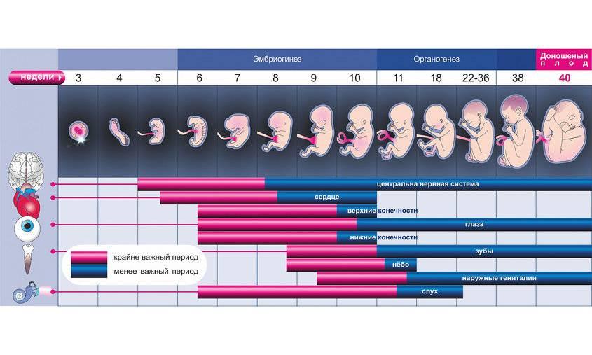 Месячные при беременности - кровотечение во время беременности