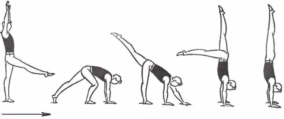 Гимнастика, чтобы научиться делать колесо в домашних условиях правильно и быстро