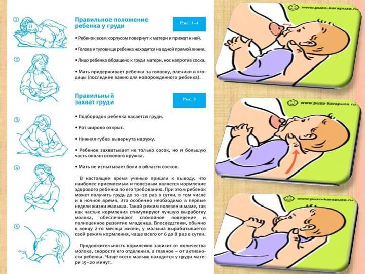 Как правильно кормить грудничка